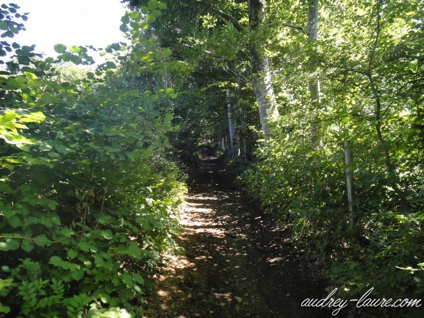 forêt laffrey cholonge