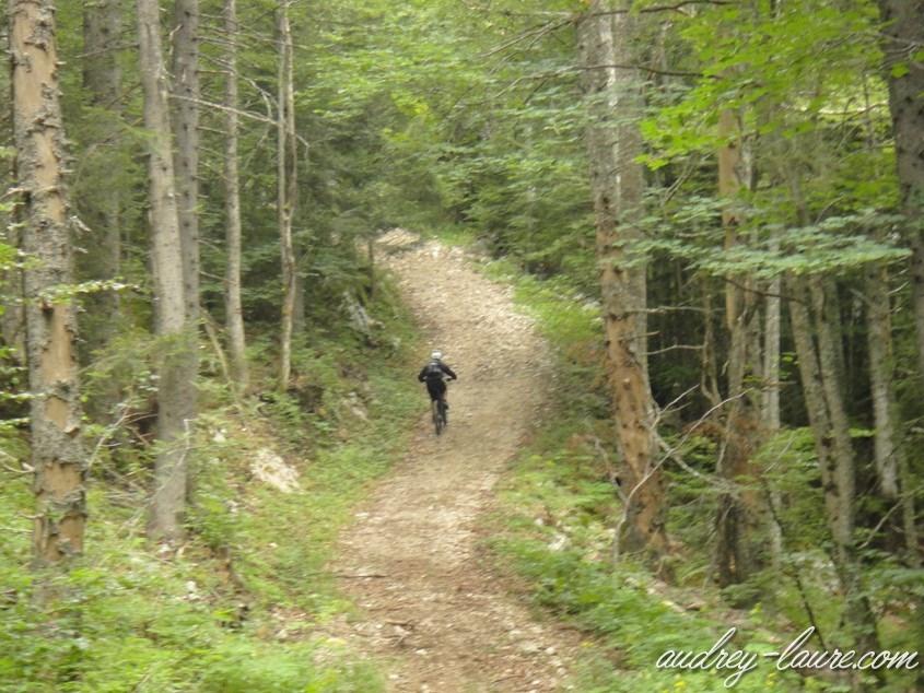 vélo forêt herbouilly