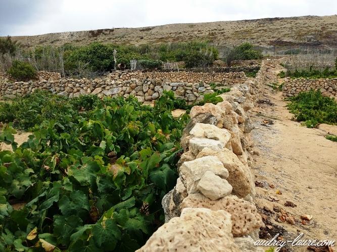 cultures porto santo plantations