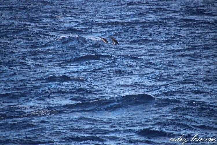 madère porto santo dauphins