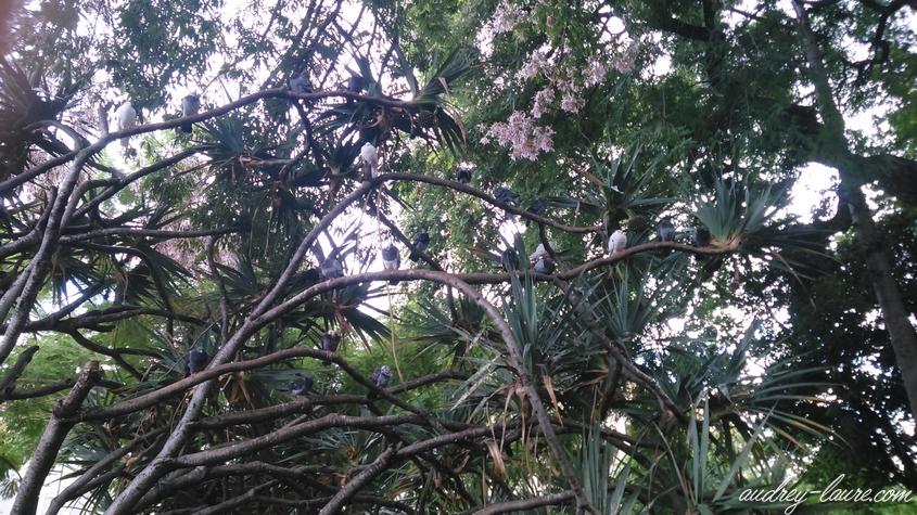 jardin botanique funchal madère