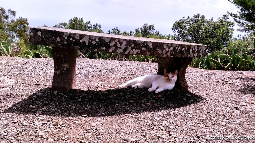 chat soleil porto santo