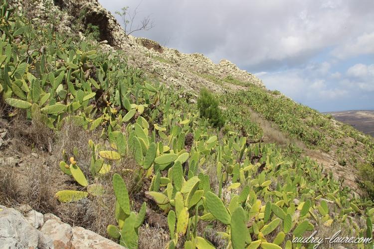 cactus porto santo