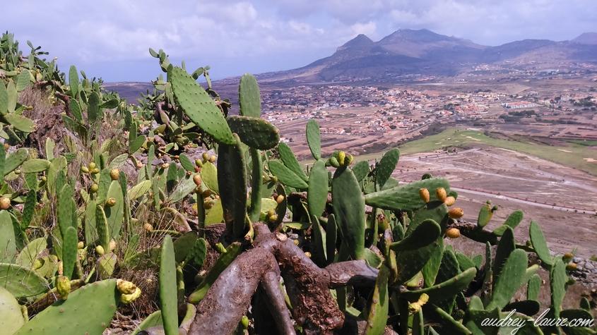 cactus porto santo madère