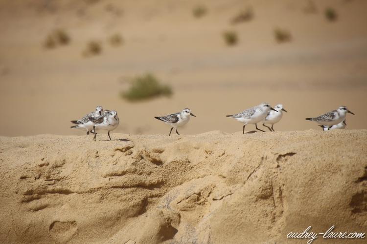 oiseaux sable océan atlantique