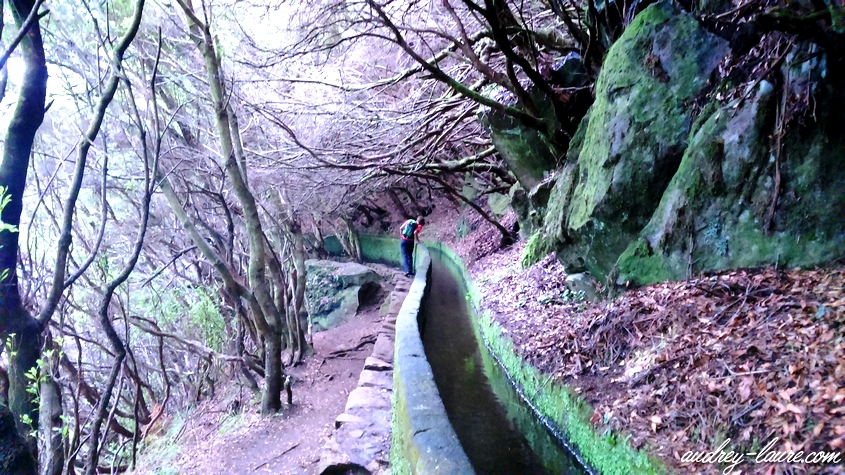 levada madère 25 sources