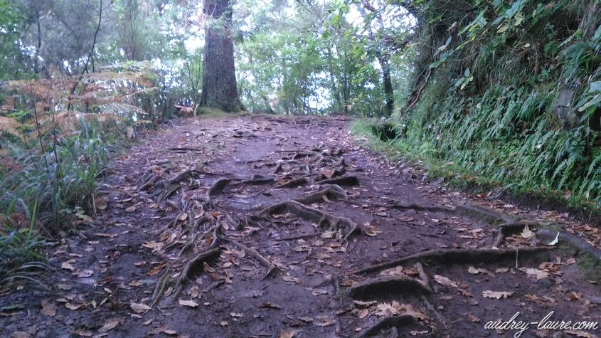caldeirao verde chemin