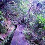Randonnée le long de la levada de Caldeirão Verde