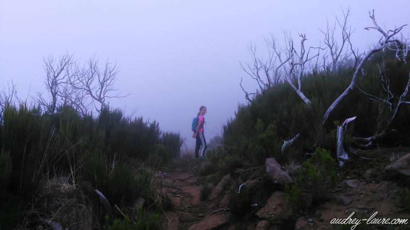 vereda da encumeada brouillard