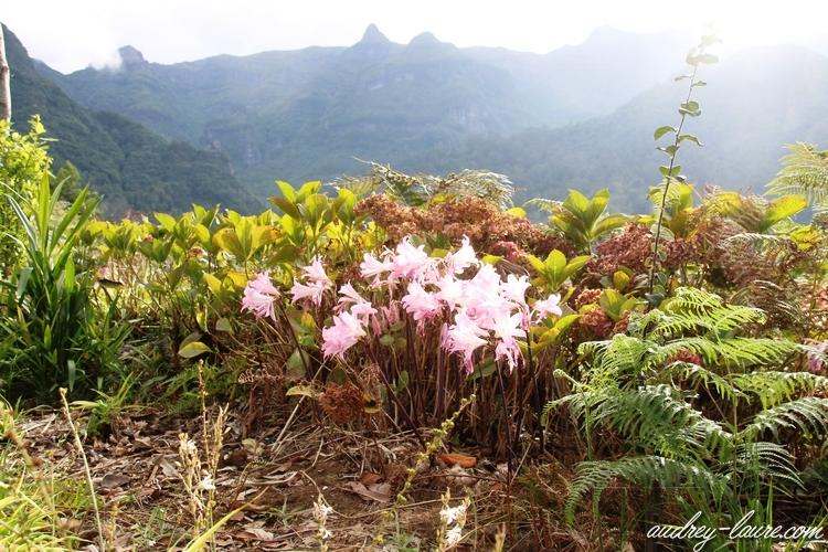 plantes madère