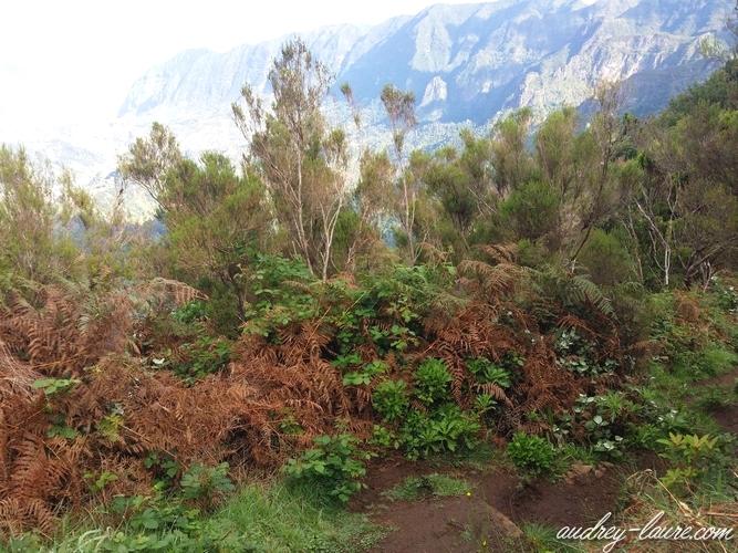 végétation Madère