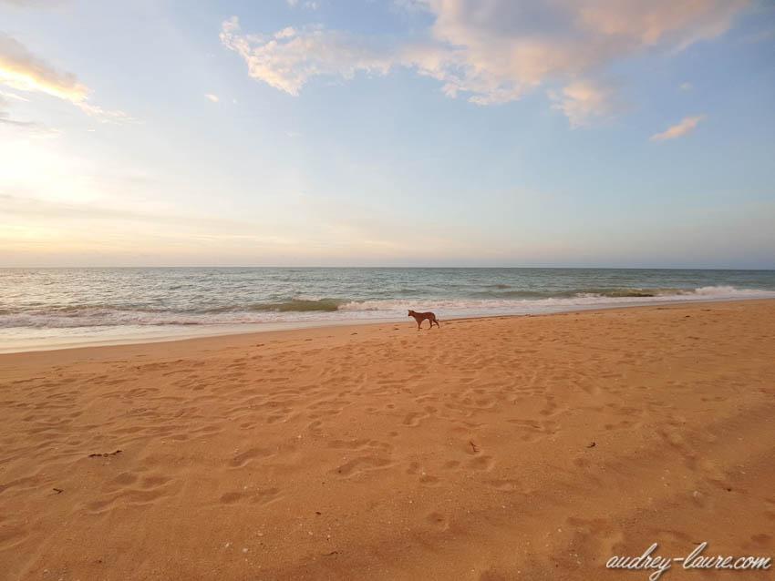 Chien sur la plage - Kalpitiya - Sri Lanka (Ceylan)  - les plus belles plages