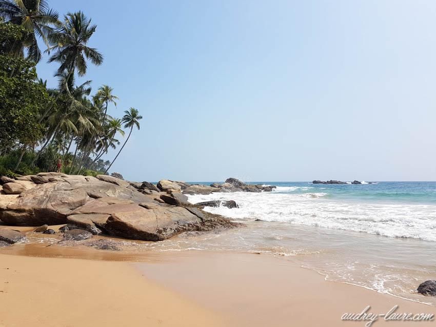 Plage de rêve - Sri Lanka - cocotiers