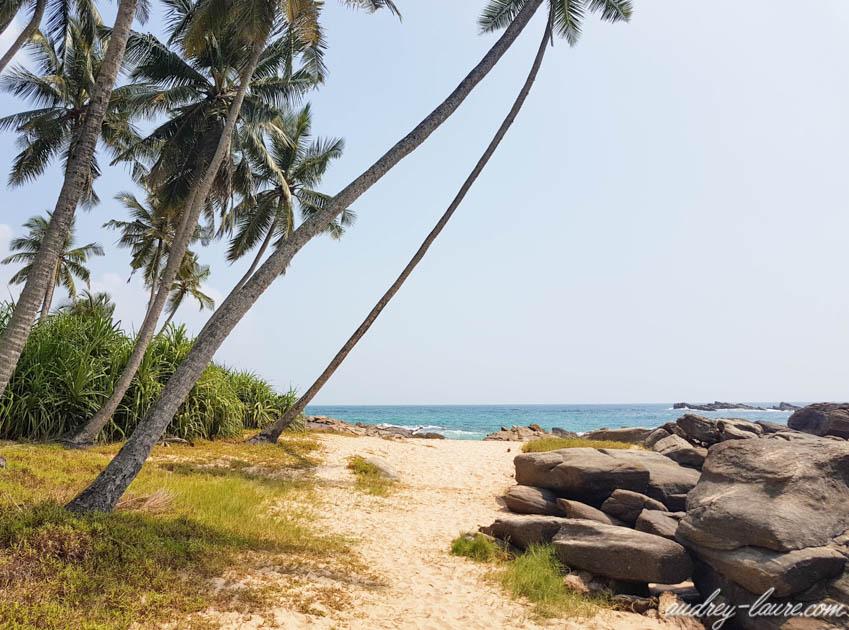 Cocotiers sur la plage - Tangalle les plus belles plages du Sri Lanka