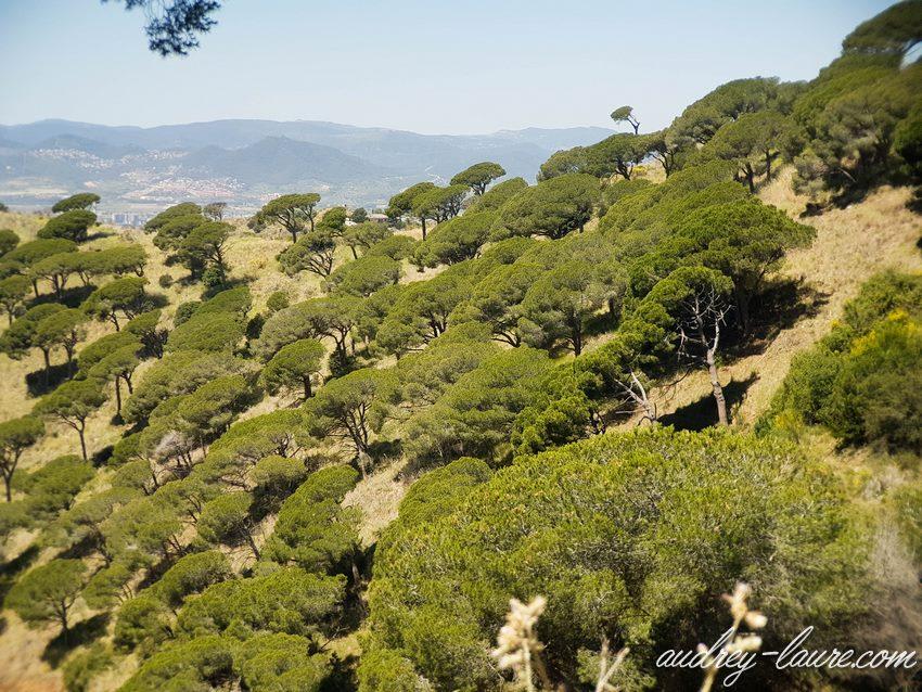 Voyage en Espagne - Barcelone - Pins