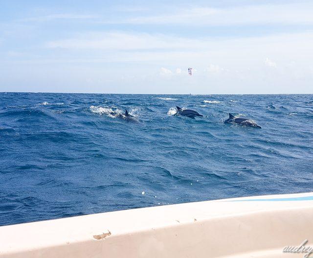 dauphins en pleine mer au Sri Lanka à Kalpitiya