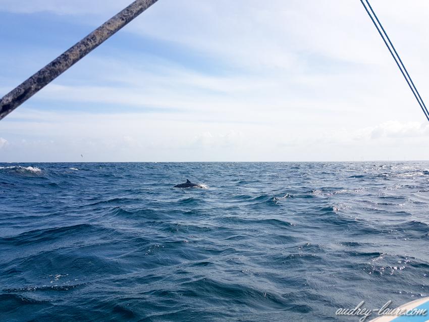 Bancs de dauphins - vacances au Sri Lanka