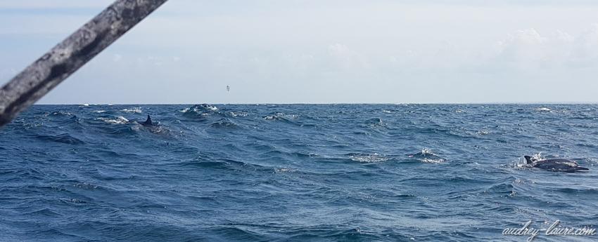 Bancs de dauphins au Sri Lanka - vacances