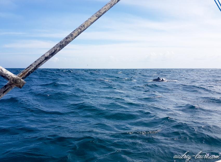 Sauts de dauphins - Sri Lanka - Kalpitiya - voyage