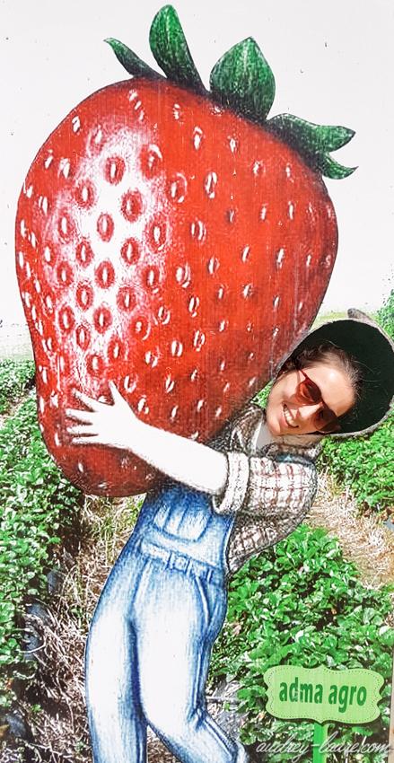Dégustation de jus de fraise à Ramboda