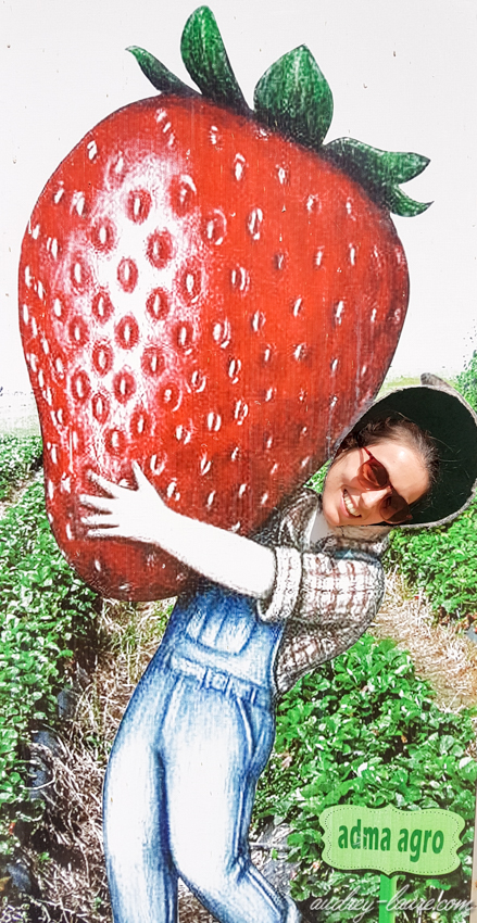 Jus de fraise Nuwara Eliya - Voyage au Sri Lanka