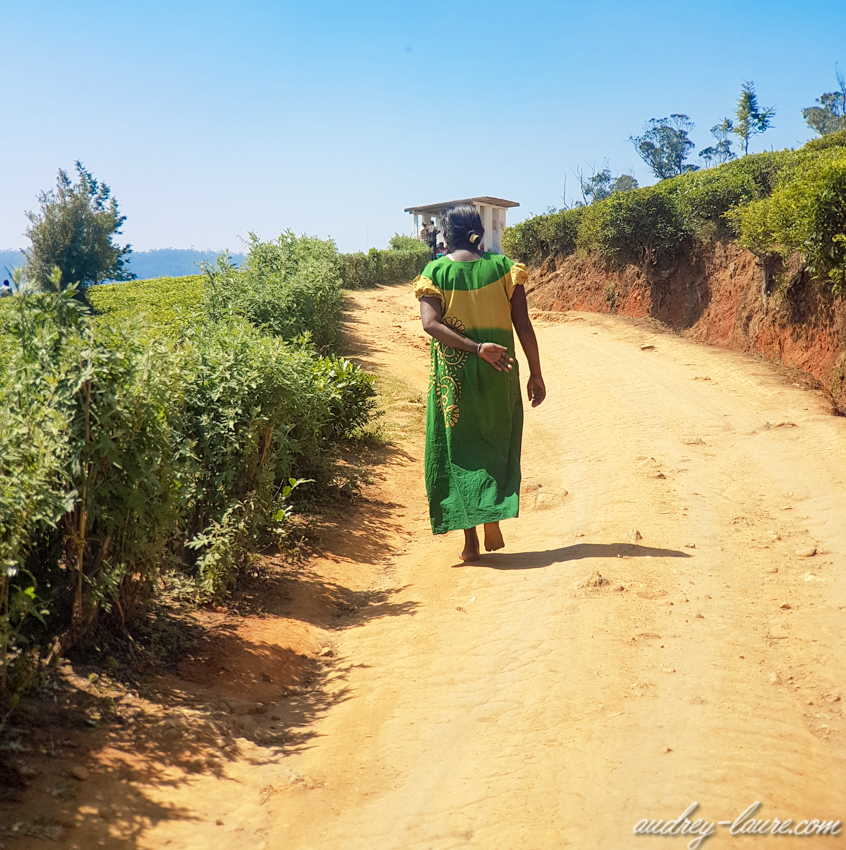 Cueilleuse de thé Sri Lankaise