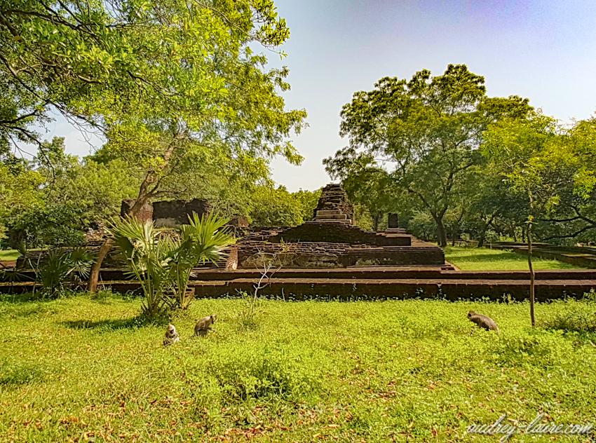 Site de Polonnaruwa - voyage au Sri Lanka - triangle culturel - singe