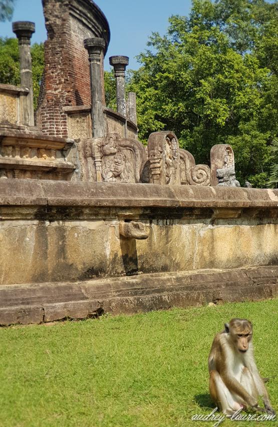 Polonnaruwa - voyage au Sri Lanka - triangle culturel - singe
