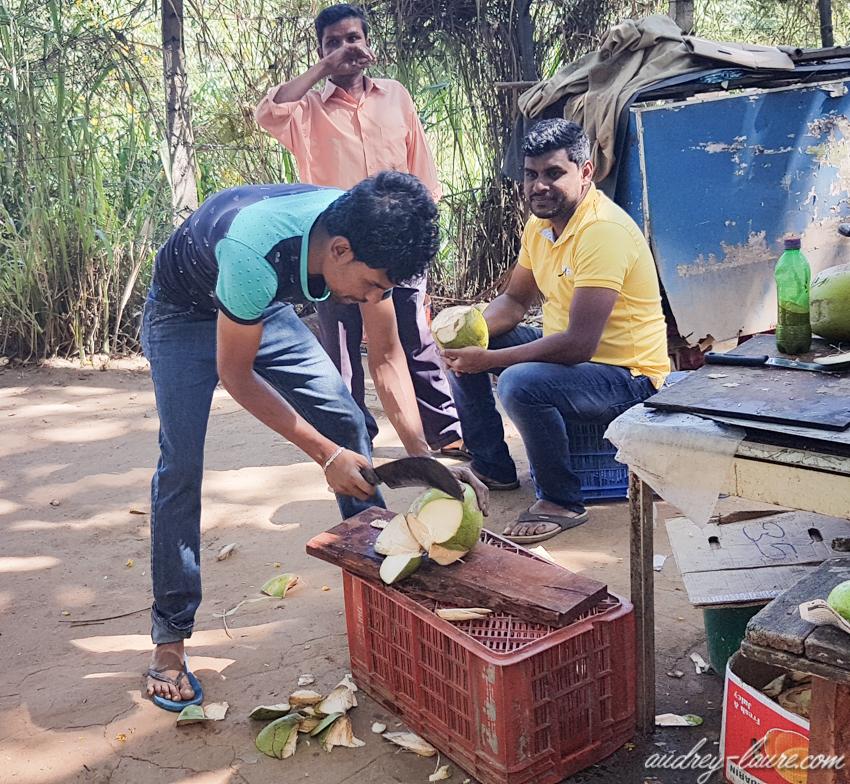 King Coconut - Voyage au Sri Lanka - boisson locale