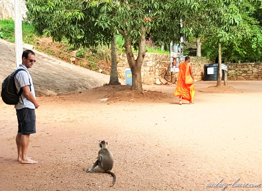 Un singe dans un temple