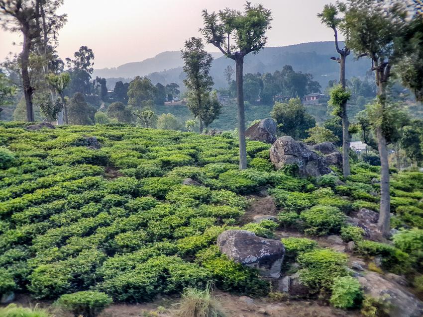 Paysage du Sri Lanka - tourisme