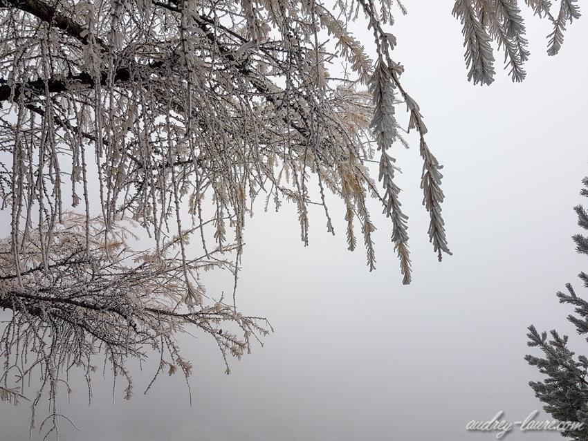ambiance hivernale féérique et givrée