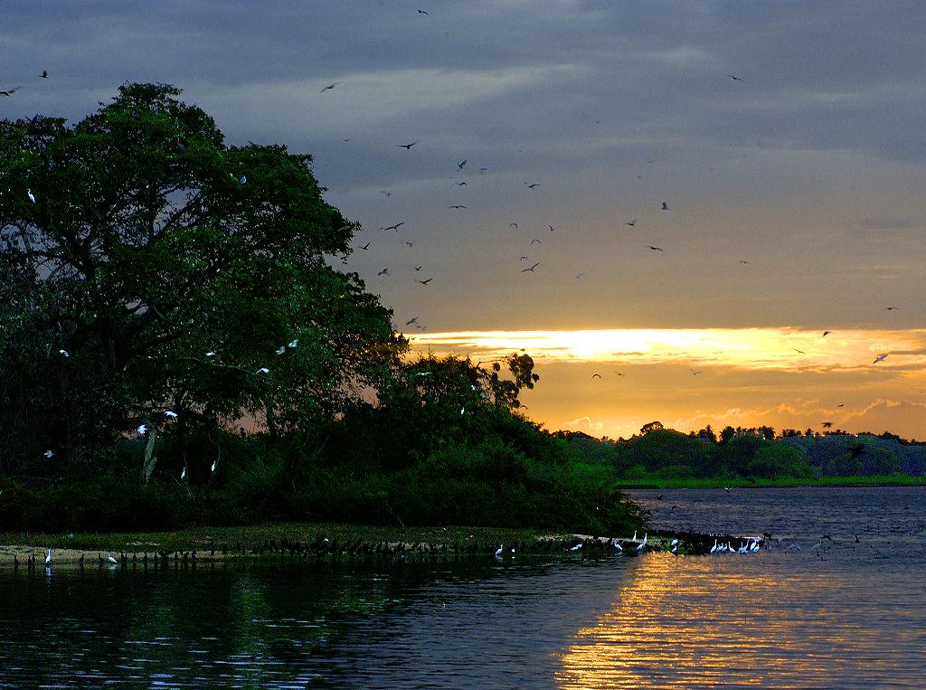Tourisme_ Sri_Lanka_Parc