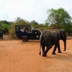 Visiter les parcs nationaux de Hambantota lors d'un séjour au Sri Lanka [article invité]