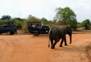 Voyage_Sri_Lanka_Parc_National