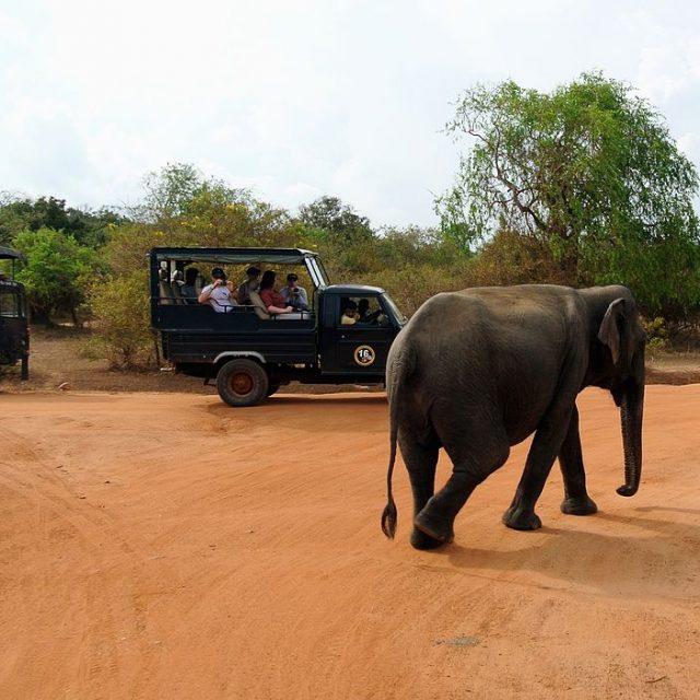 Voyage_Sri_Lanka_Parc_National