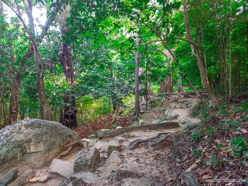 Jungle - voyage au Sri Lanka