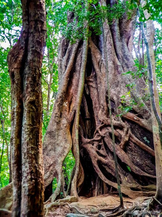 arbre noueux