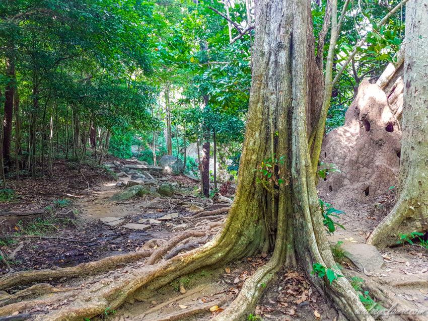 Jungle - termitière géante