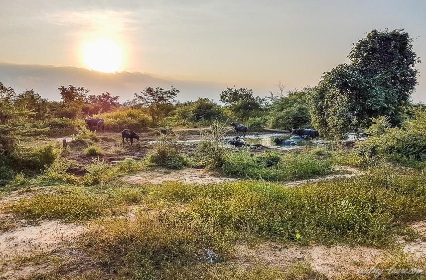 Coucher de soleil - voyage au Sri Lanka