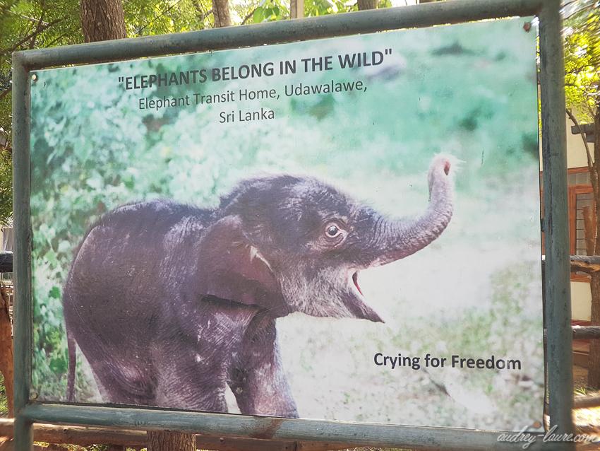 orphelinat des éléphants de Pinnawala - voyage au Sri Lanka