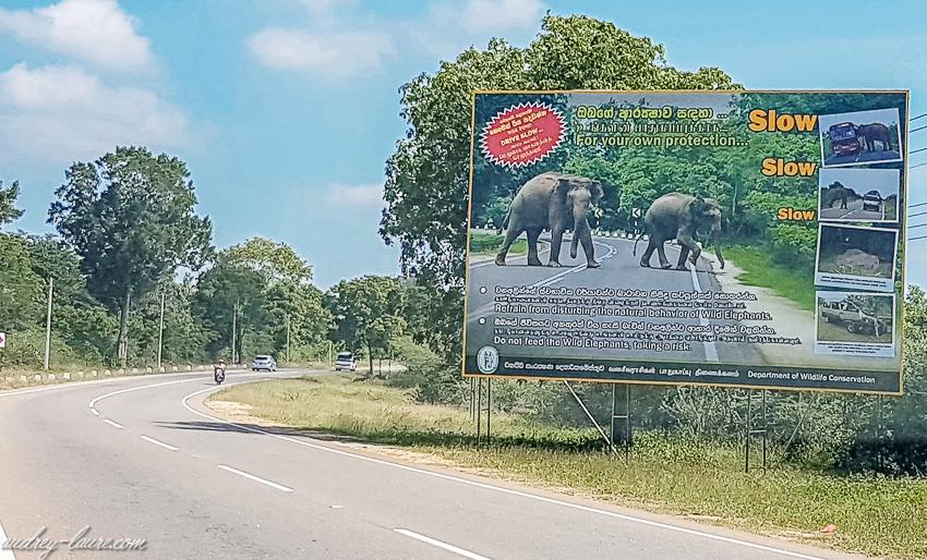 """panneau """"attention aux éléphants"""""""