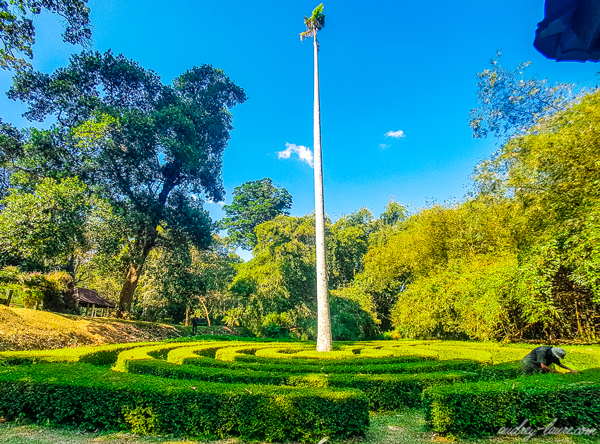 Jardin botanique royal de Peradeniya - Sri Lanka voyage