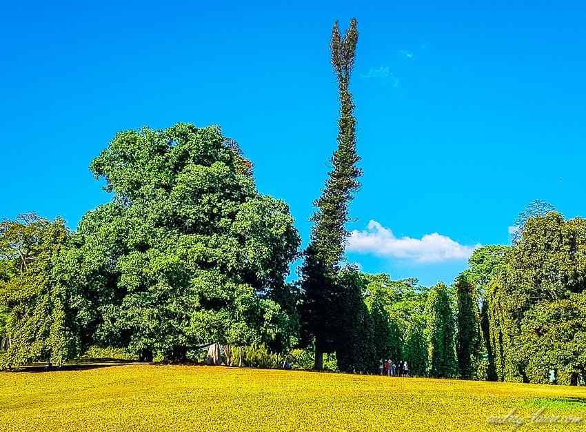 Jardin botanique royal de Peradeniya - Sri Lanka