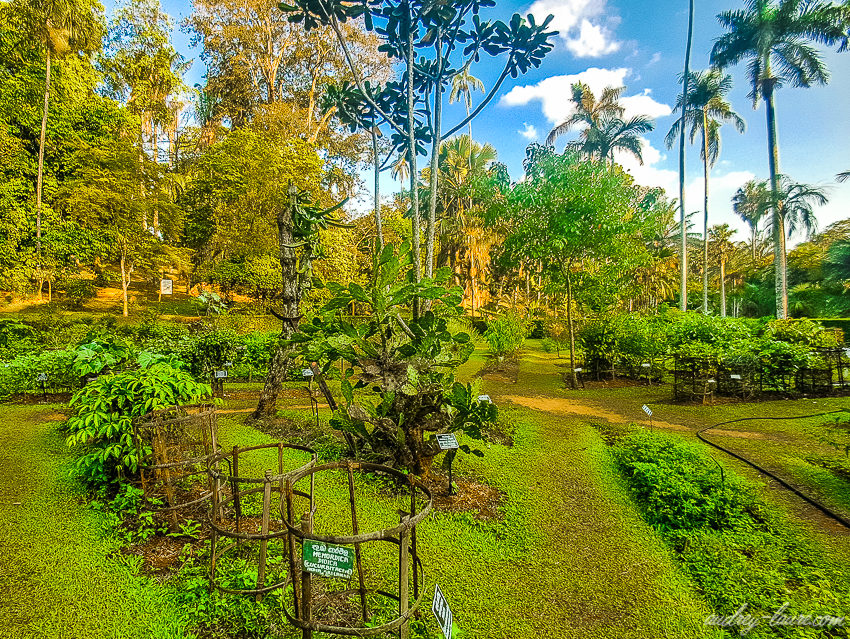 Jardins botaniques royaux de Peradeniya - Sri Lanka