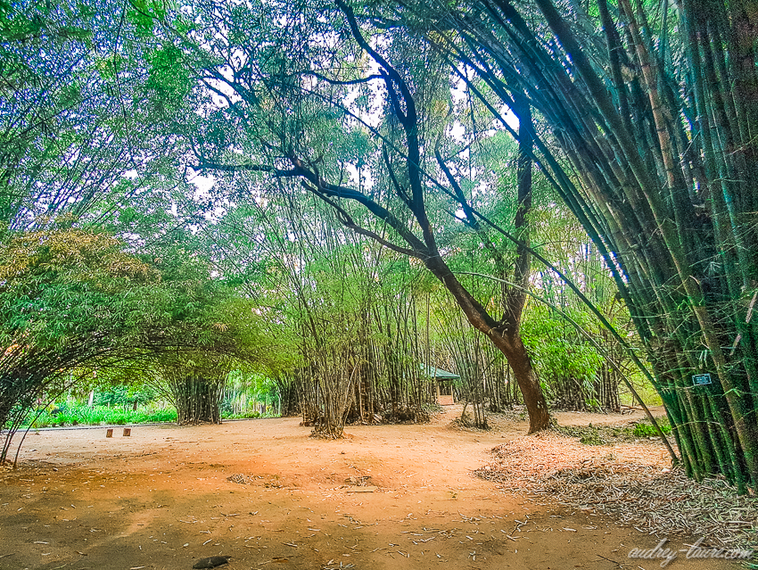 Jardins botaniques royaux de Peradeniya - Sri Lanka (9)