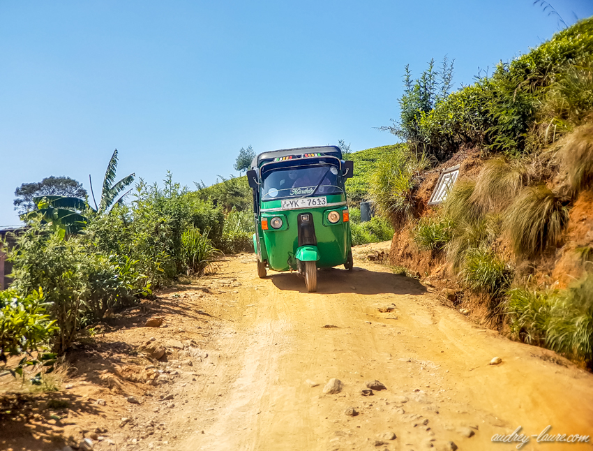 Nuwara Eliya - Sri Lanka - tuk-tuk dans les plantations de thé !