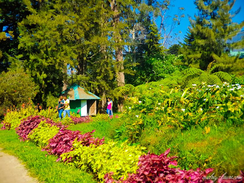 Parc Victoria - Nuwara Eliya - Voyage au Sri Lanka - jardin