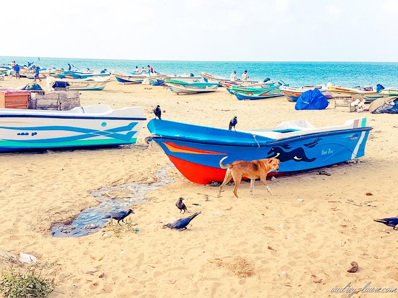 Pêcheurs en mer du Sri Lanka