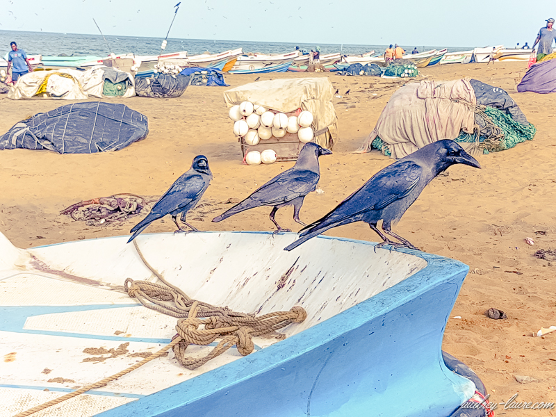 Pêcheurs en mer du Sri Lanka - bateaux de pêche